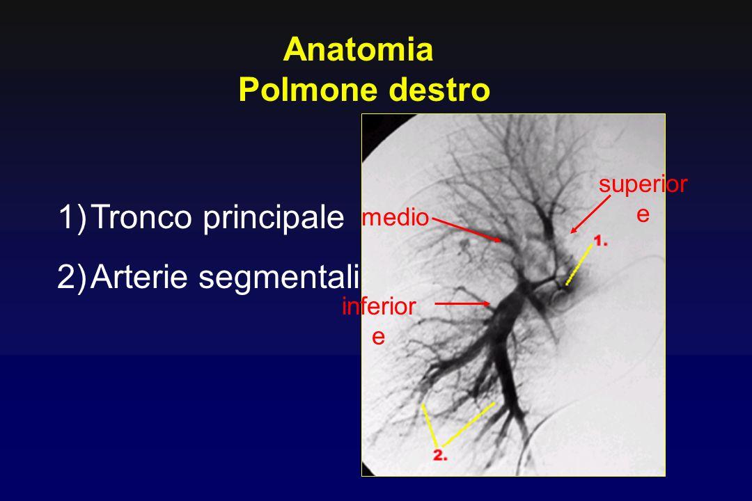 Anatomia Polmone destro Tronco principale Arterie segmentali superiore
