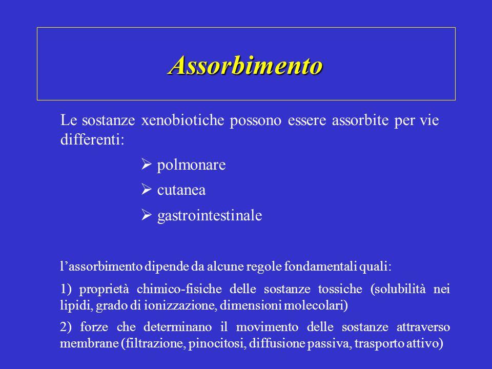 Assorbimento Le sostanze xenobiotiche possono essere assorbite per vie differenti:  polmonare.  cutanea.