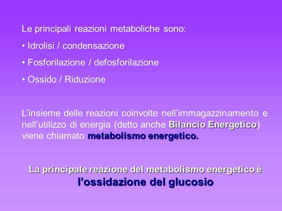 Le principali reazioni metaboliche sono: