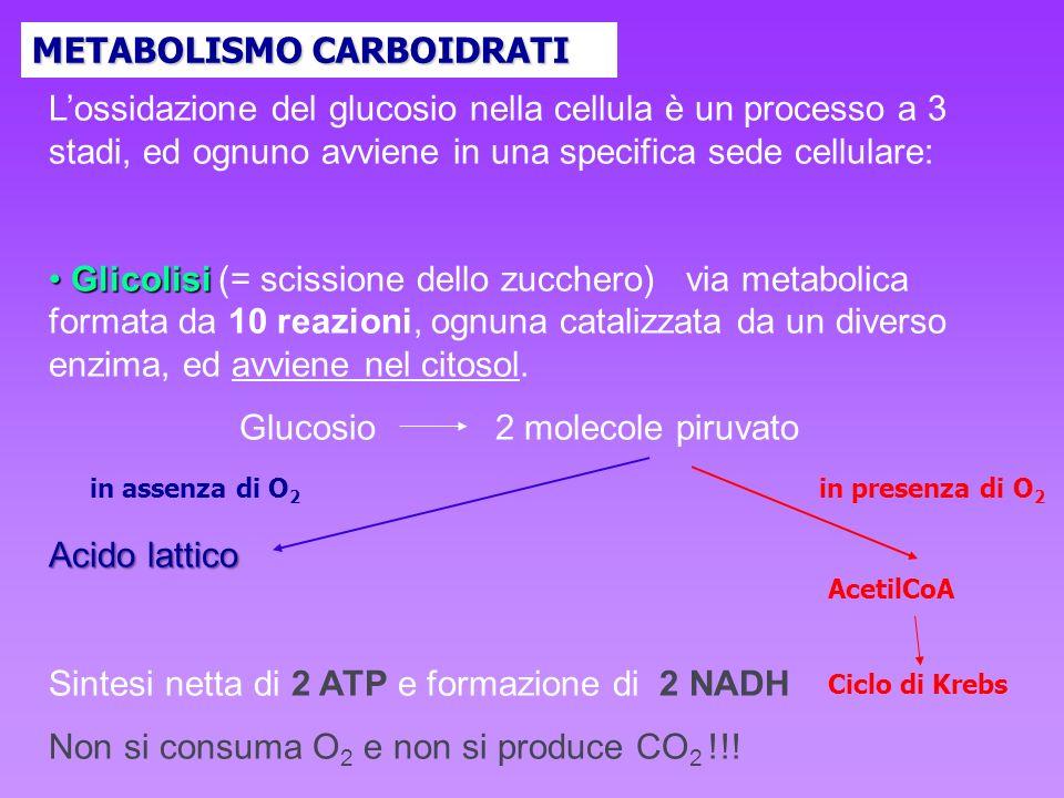 Glucosio 2 molecole piruvato