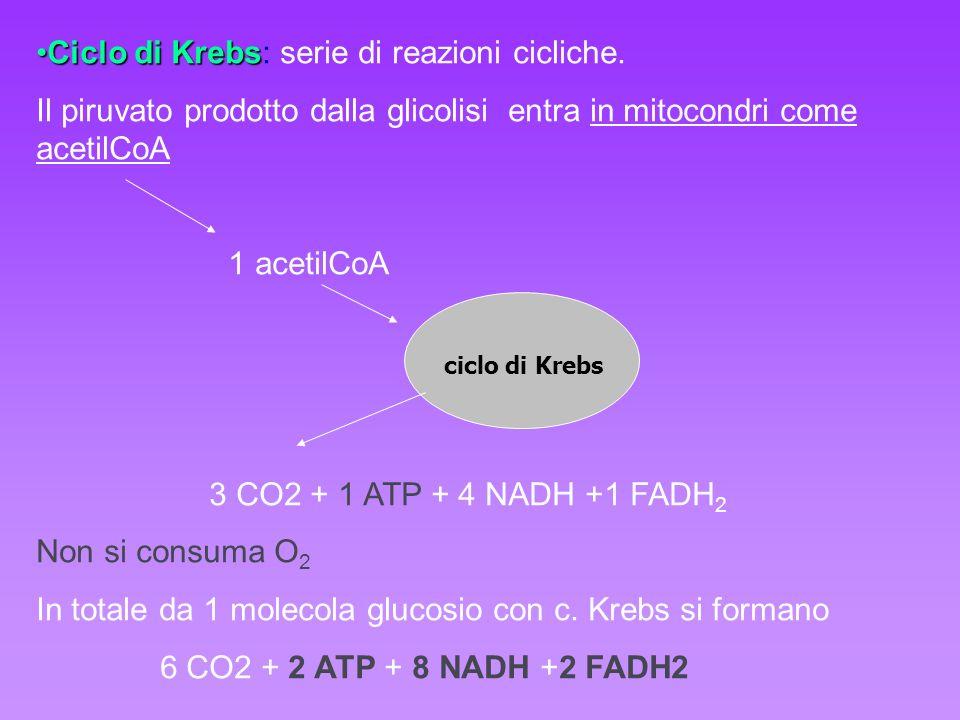 Ciclo di Krebs: serie di reazioni cicliche.