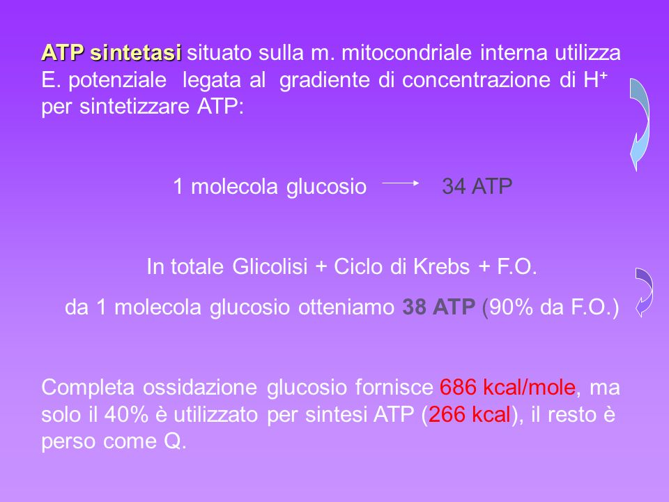 In totale Glicolisi + Ciclo di Krebs + F.O.