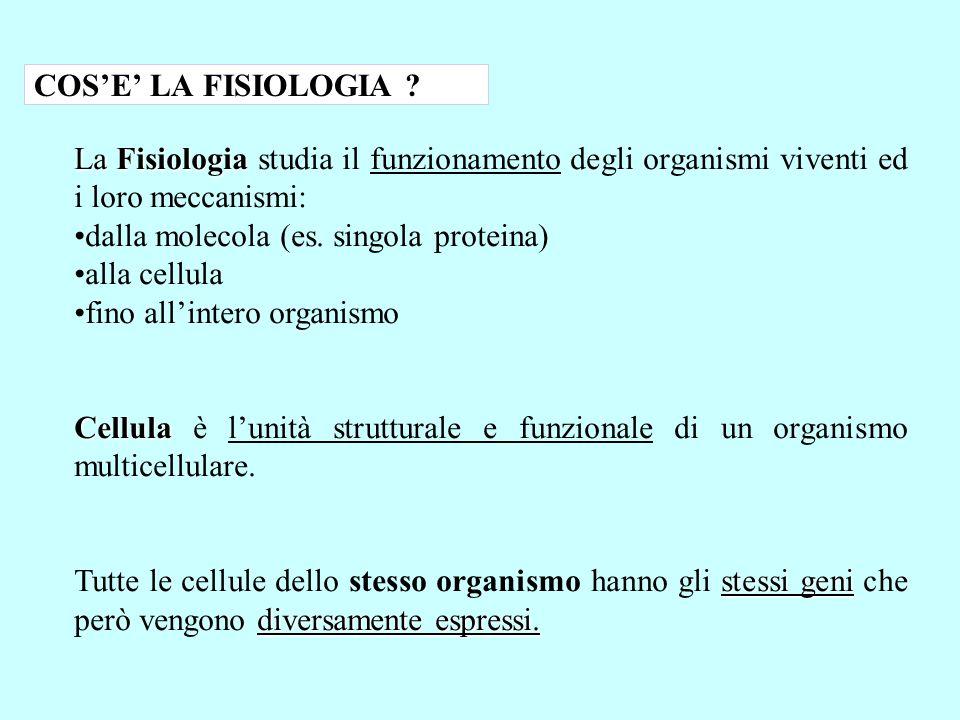 COS'E' LA FISIOLOGIA La Fisiologia studia il funzionamento degli organismi viventi ed i loro meccanismi: