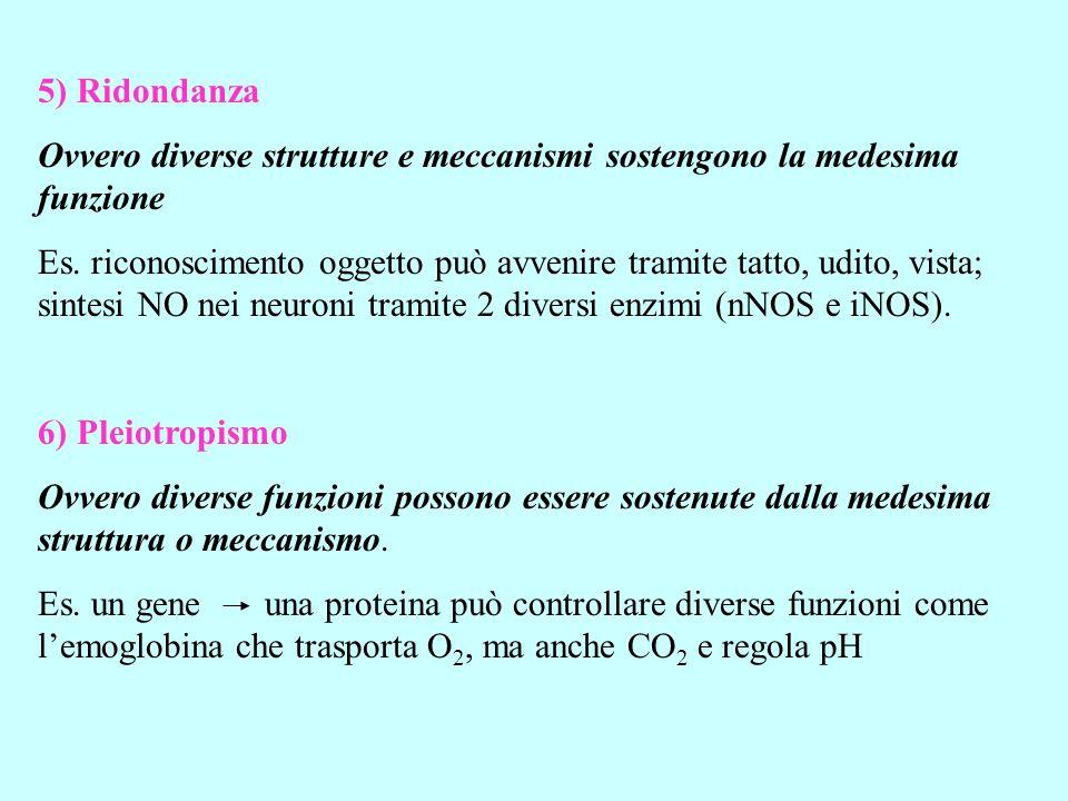 5) Ridondanza Ovvero diverse strutture e meccanismi sostengono la medesima funzione.