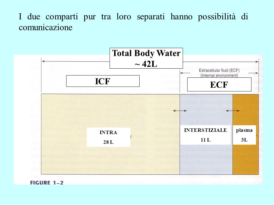 Total Body Water ~ 42L ICF ECF