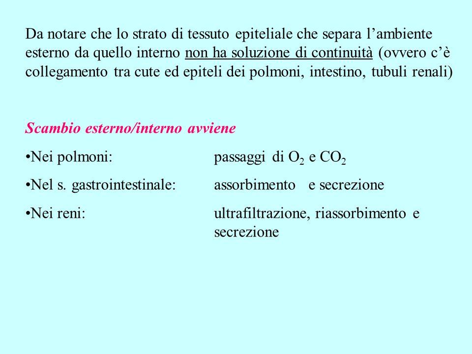 Da notare che lo strato di tessuto epiteliale che separa l'ambiente esterno da quello interno non ha soluzione di continuità (ovvero c'è collegamento tra cute ed epiteli dei polmoni, intestino, tubuli renali)