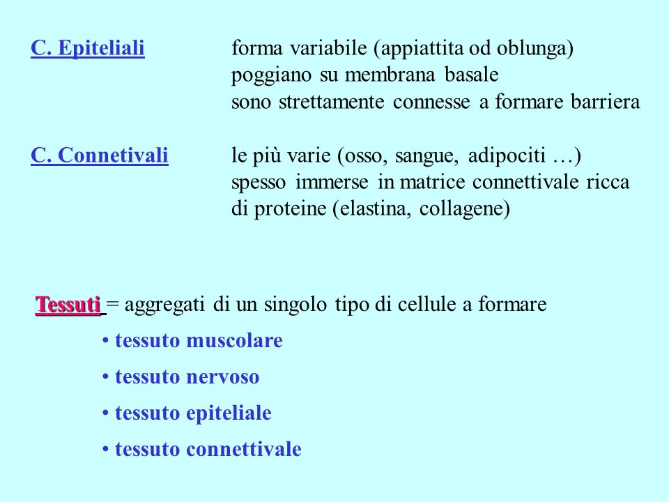 C. Epiteliali forma variabile (appiattita od oblunga)