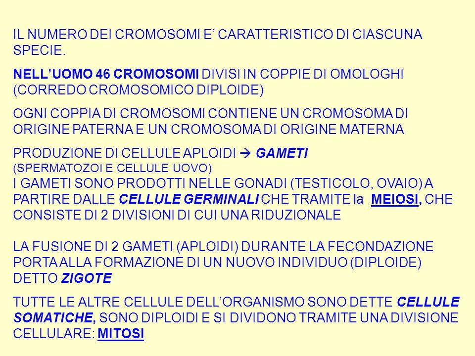 IL NUMERO DEI CROMOSOMI E' CARATTERISTICO DI CIASCUNA SPECIE.