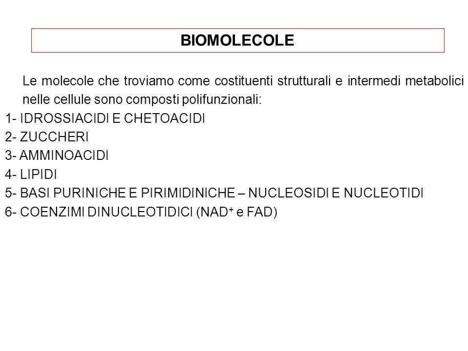 BIOMOLECOLE Le molecole che troviamo come costituenti strutturali e intermedi metabolici nelle cellule sono composti polifunzionali: