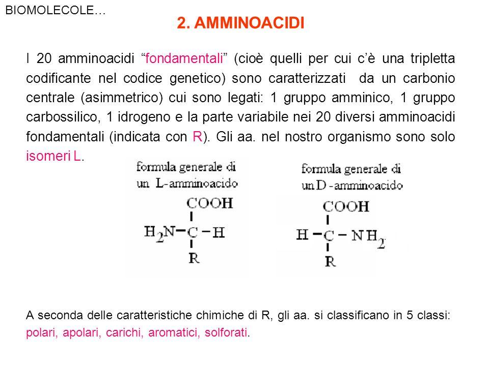 BIOMOLECOLE…2. AMMINOACIDI.