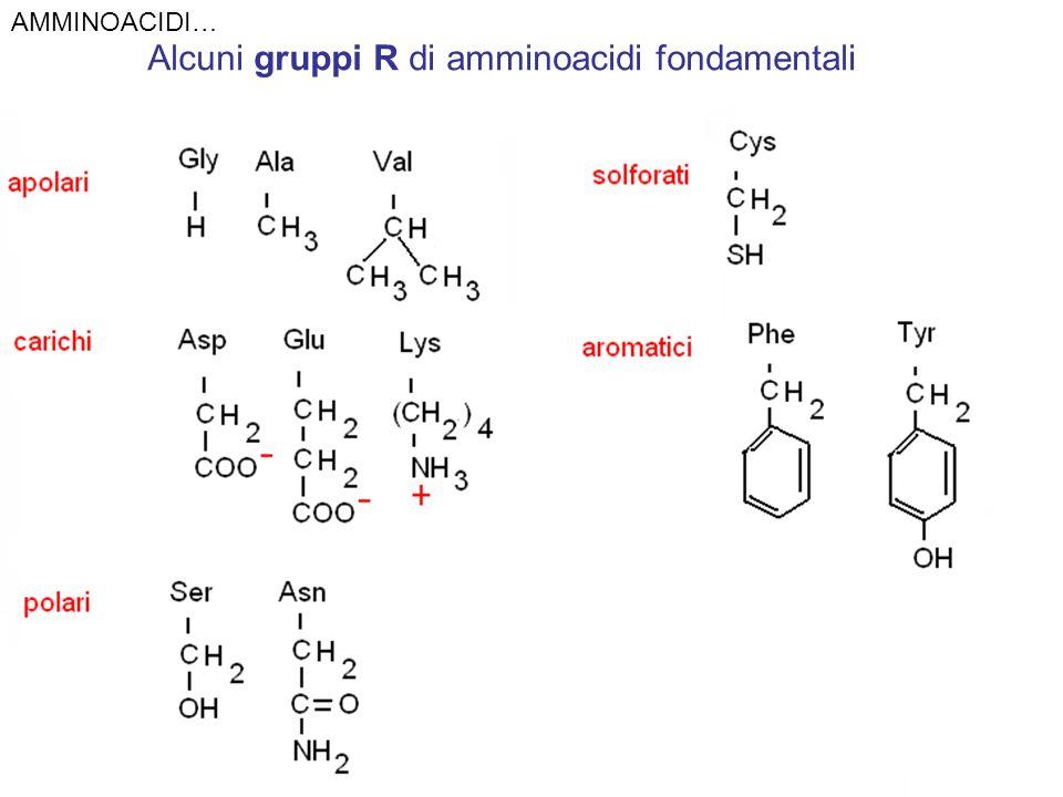 Alcuni gruppi R di amminoacidi fondamentali
