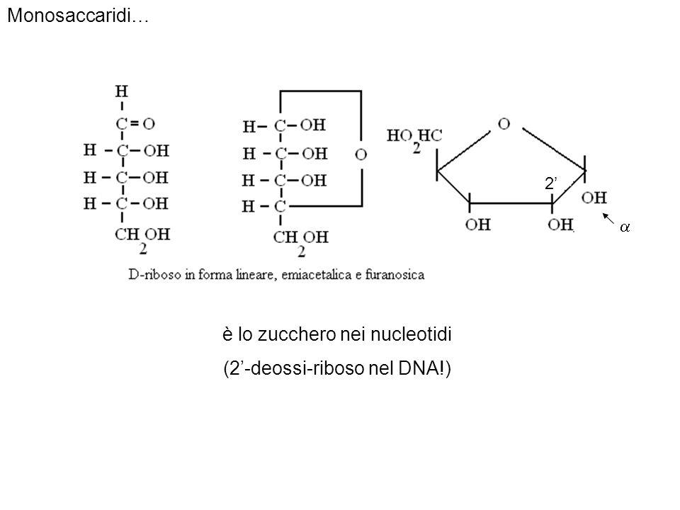è lo zucchero nei nucleotidi (2'-deossi-riboso nel DNA!)