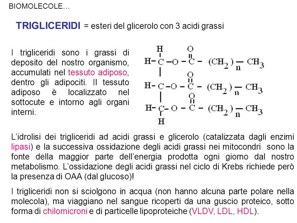 TRIGLICERIDI = esteri del glicerolo con 3 acidi grassi