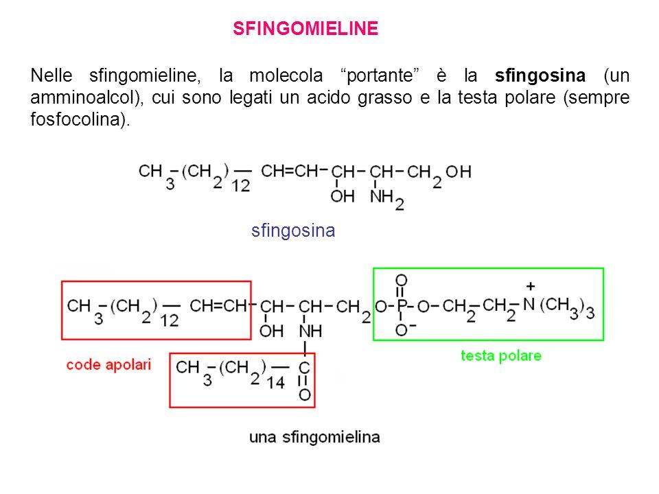 SFINGOMIELINE