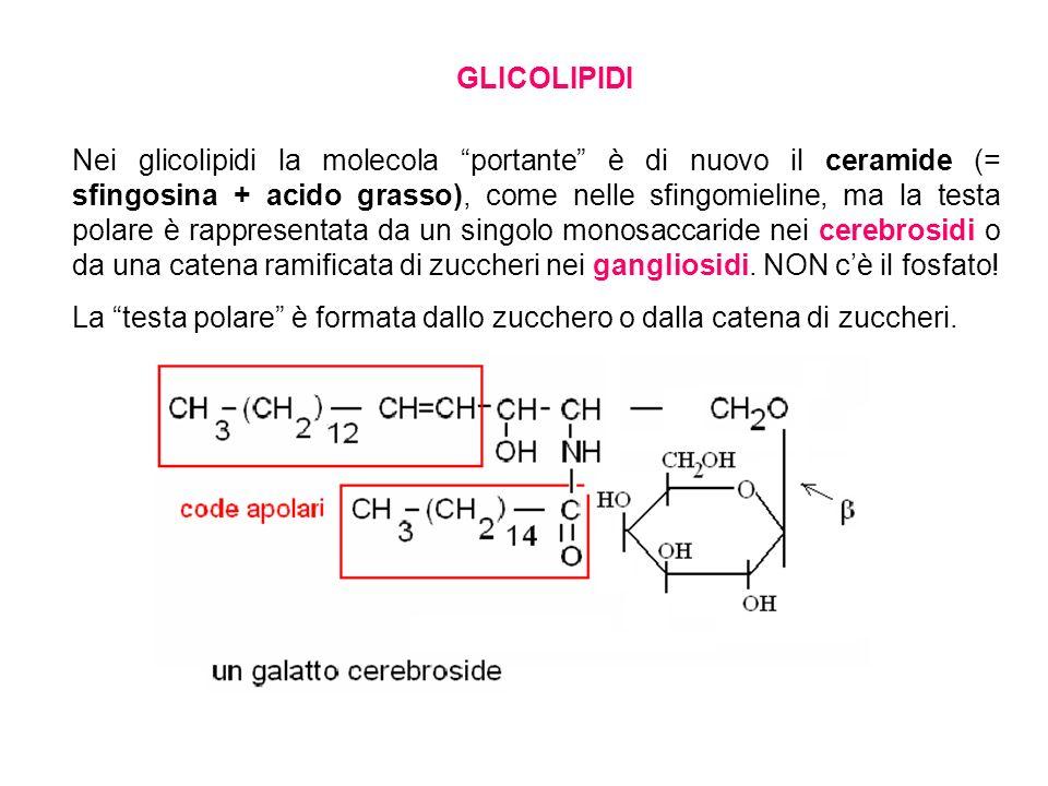 GLICOLIPIDI