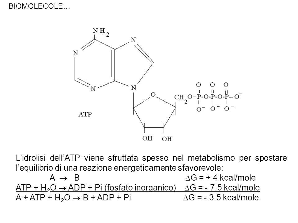 ATP + H2O  ADP + Pi (fosfato inorganico) G = - 7.5 kcal/mole
