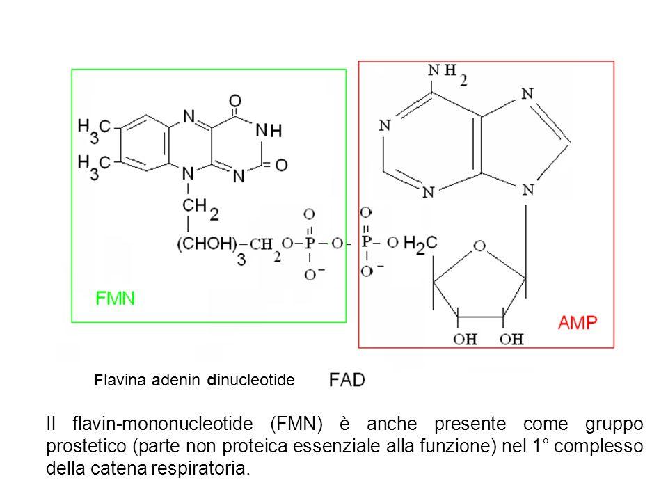 Flavina adenin dinucleotide