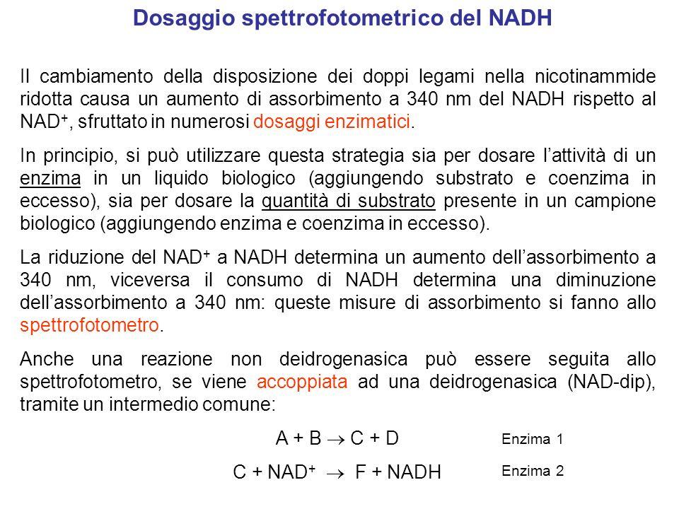 Dosaggio spettrofotometrico del NADH