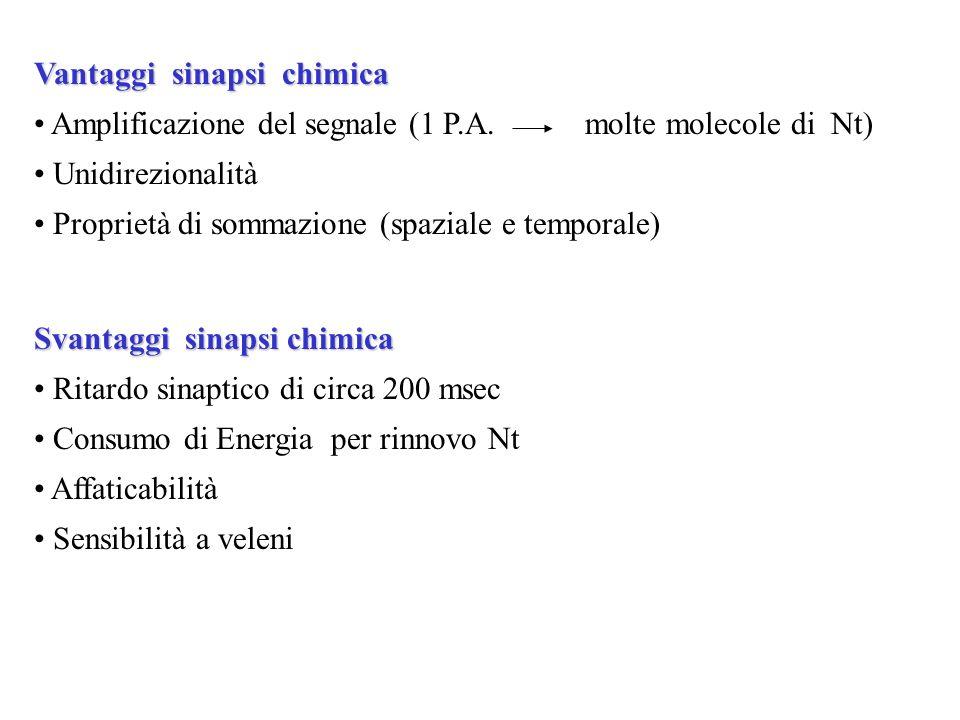 Vantaggi sinapsi chimica
