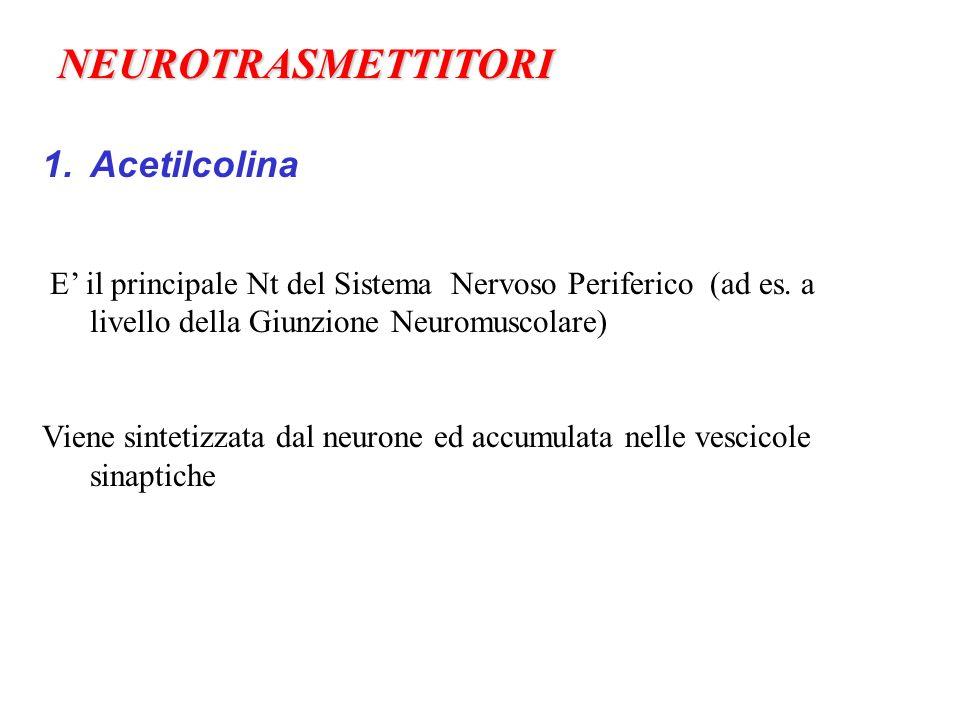 NEUROTRASMETTITORI Acetilcolina
