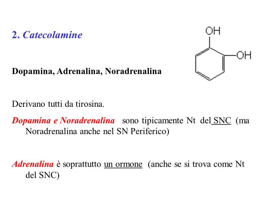 2. Catecolamine Dopamina, Adrenalina, Noradrenalina