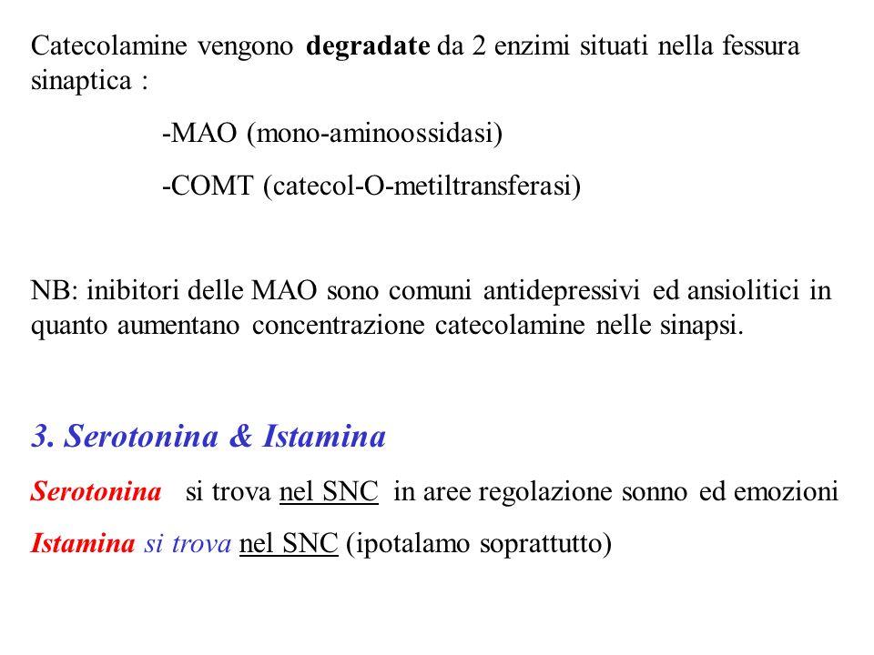 Catecolamine vengono degradate da 2 enzimi situati nella fessura sinaptica :
