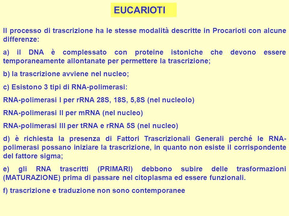 EUCARIOTI Il processo di trascrizione ha le stesse modalità descritte in Procarioti con alcune differenze: