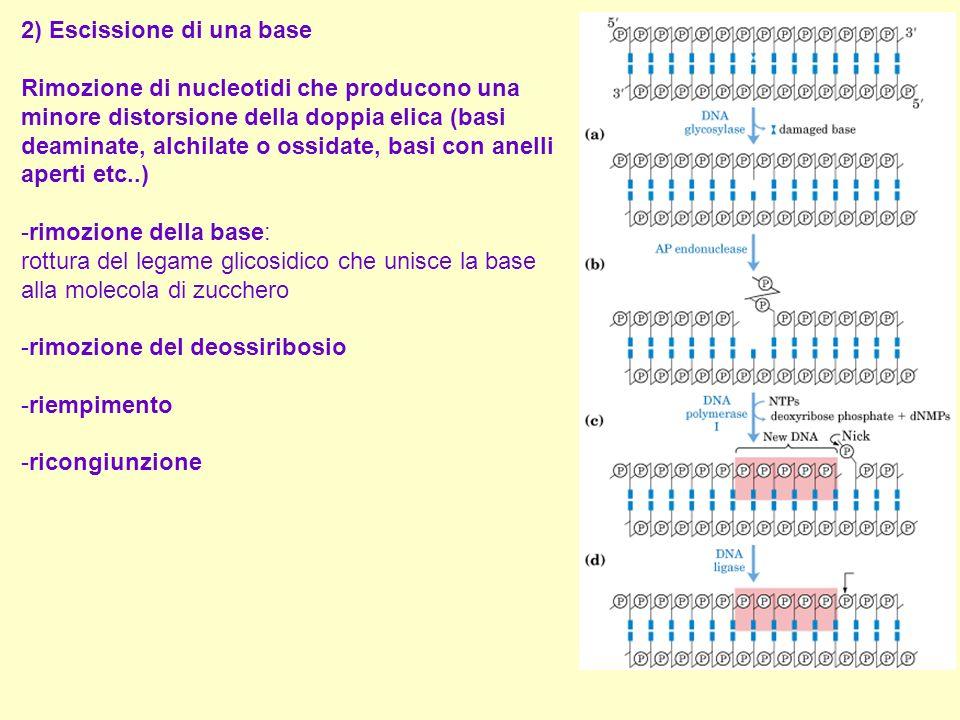 2) Escissione di una base