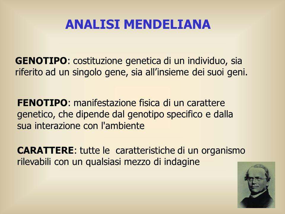 ANALISI MENDELIANA GENOTIPO: costituzione genetica di un individuo, sia riferito ad un singolo gene, sia all'insieme dei suoi geni.