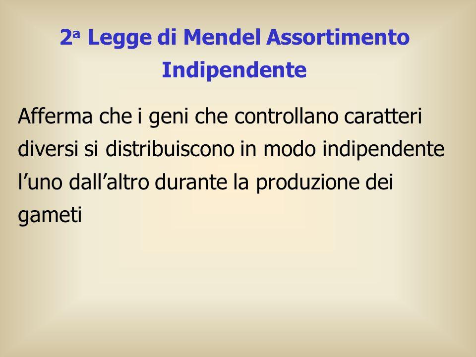 2a Legge di Mendel Assortimento Indipendente