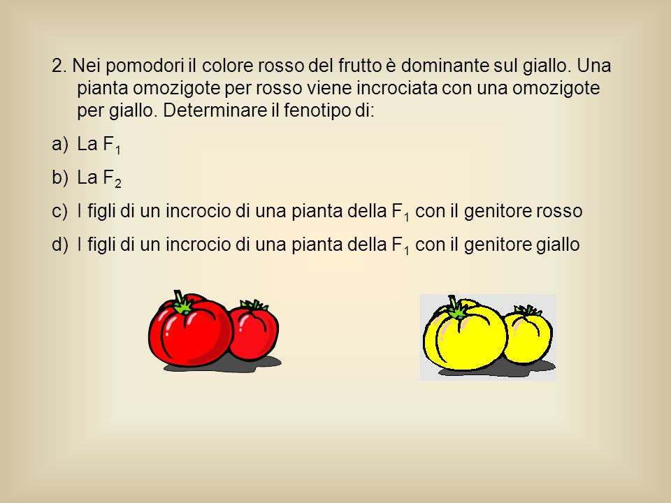 2. Nei pomodori il colore rosso del frutto è dominante sul giallo
