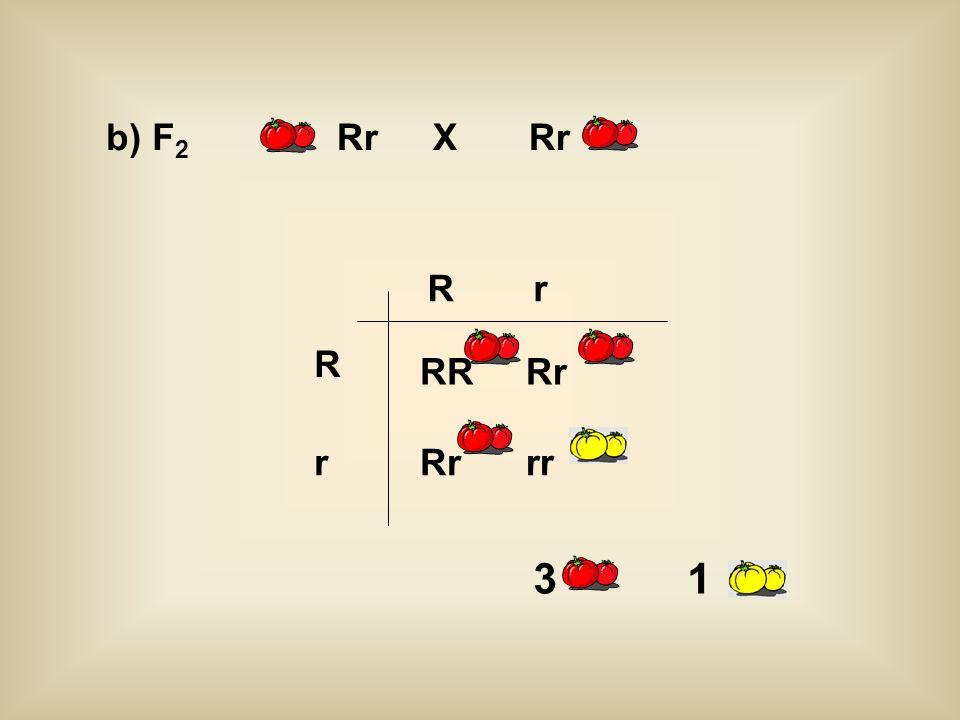 b) F2 Rr X Rr R r R RR Rr r Rr rr 3 1