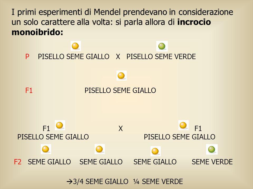 I primi esperimenti di Mendel prendevano in considerazione un solo carattere alla volta: si parla allora di incrocio monoibrido: