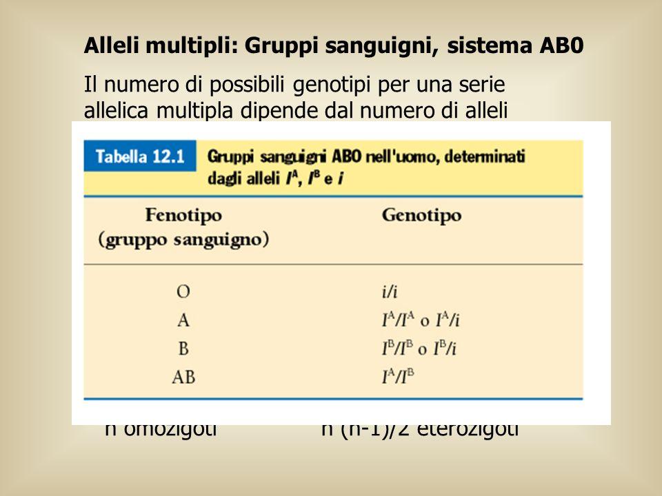 n (n+1)/2 genotipi possibili