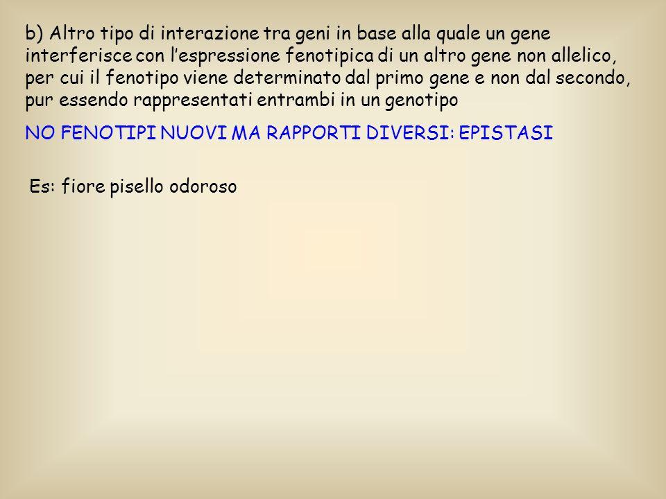 b) Altro tipo di interazione tra geni in base alla quale un gene interferisce con l'espressione fenotipica di un altro gene non allelico, per cui il fenotipo viene determinato dal primo gene e non dal secondo, pur essendo rappresentati entrambi in un genotipo