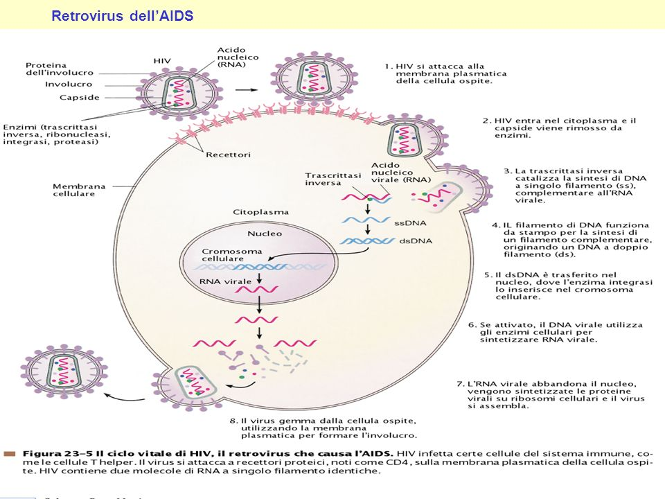 Retrovirus dell'AIDS