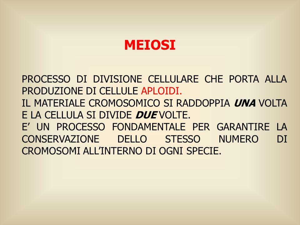MEIOSI PROCESSO DI DIVISIONE CELLULARE CHE PORTA ALLA PRODUZIONE DI CELLULE APLOIDI.