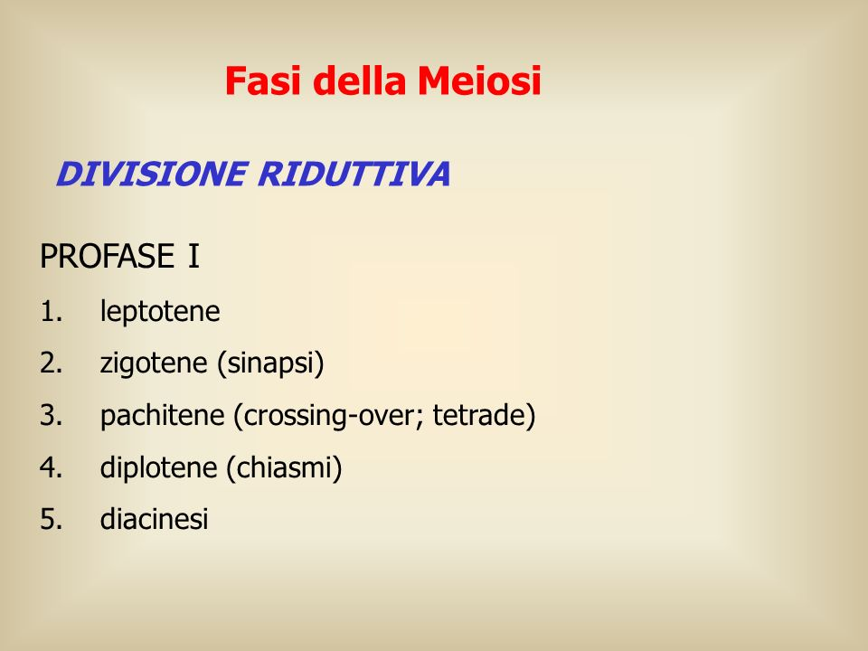 Fasi della Meiosi PROFASE I DIVISIONE RIDUTTIVA 1. leptotene