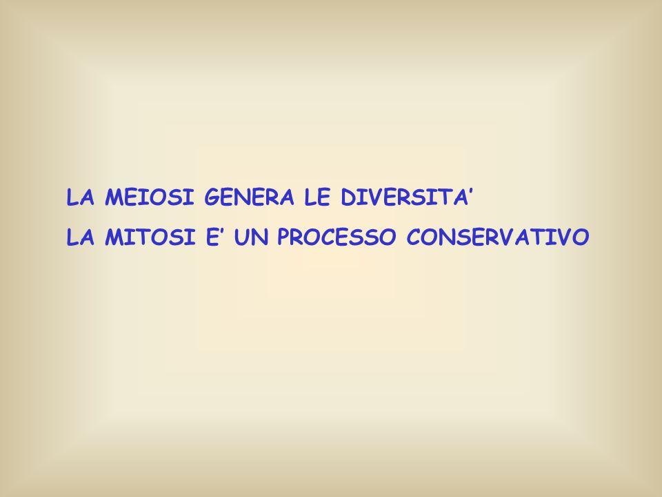LA MEIOSI GENERA LE DIVERSITA'