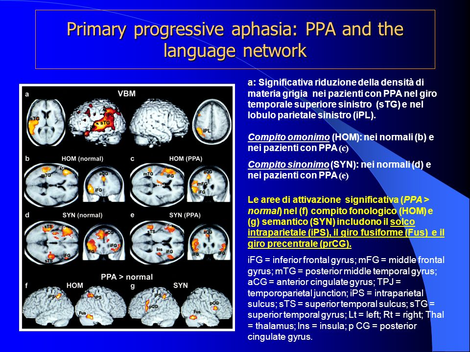 Primary progressive aphasia: PPA and the language network