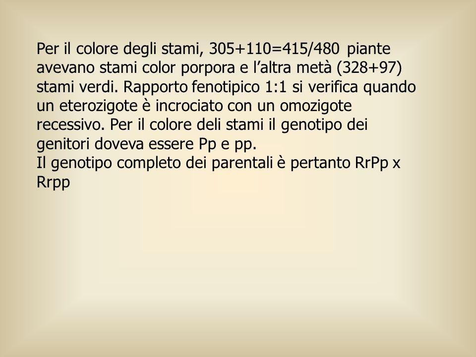 Per il colore degli stami, 305+110=415/480 piante avevano stami color porpora e l'altra metà (328+97) stami verdi. Rapporto fenotipico 1:1 si verifica quando un eterozigote è incrociato con un omozigote recessivo. Per il colore deli stami il genotipo dei genitori doveva essere Pp e pp.