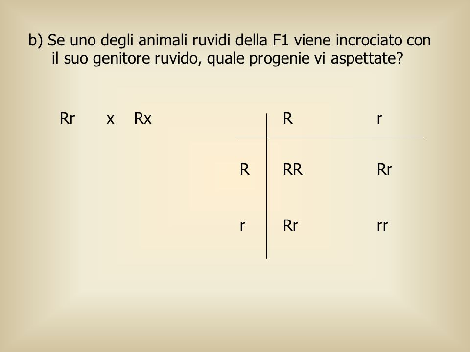 b) Se uno degli animali ruvidi della F1 viene incrociato con il suo genitore ruvido, quale progenie vi aspettate