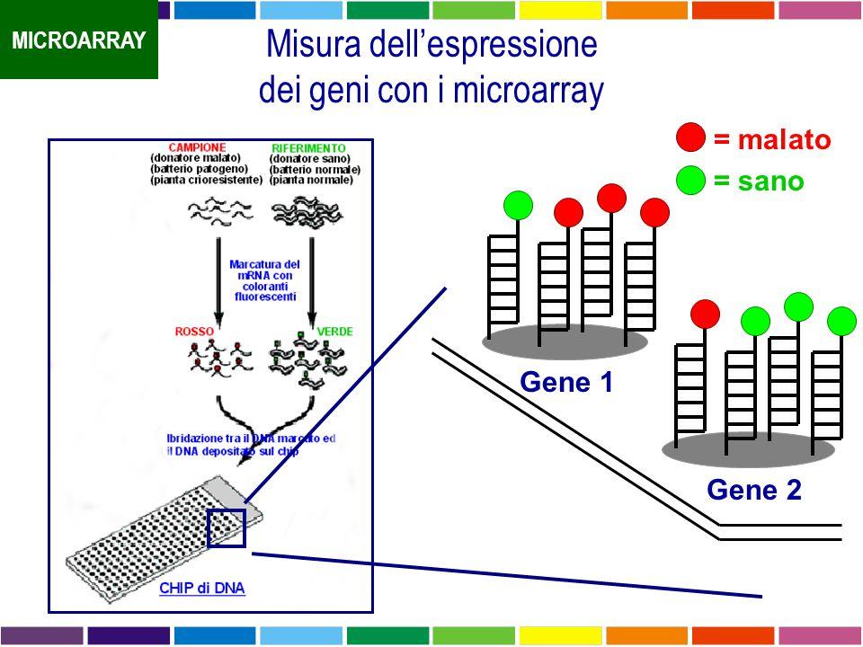 Misura dell'espressione dei geni con i microarray