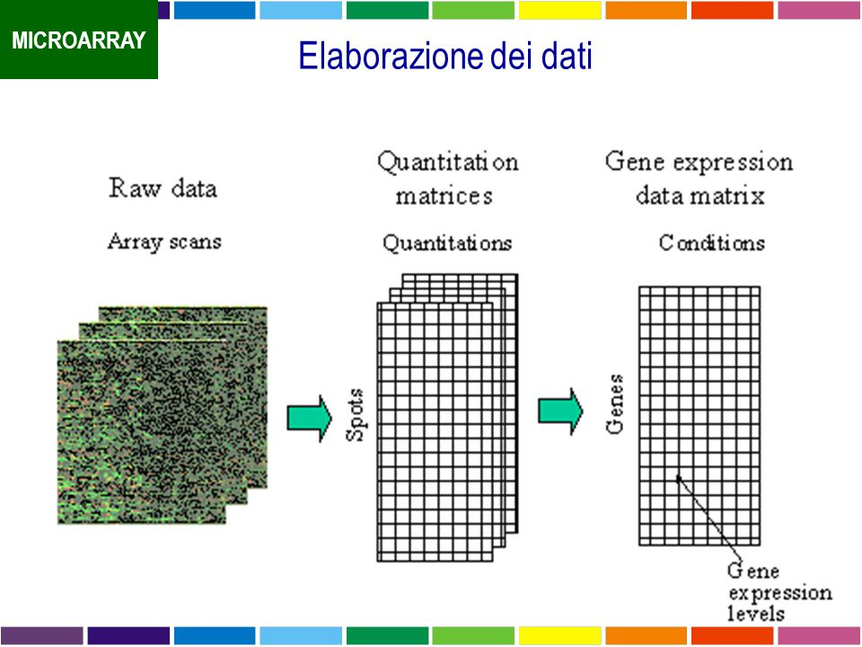 MICROARRAY Elaborazione dei dati