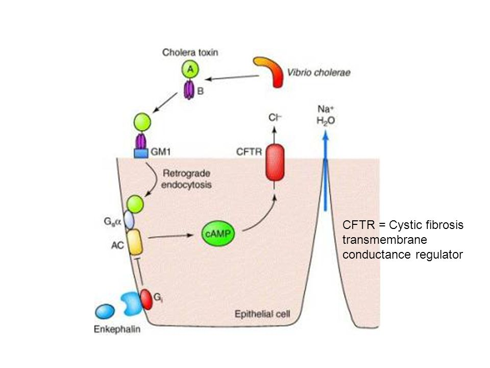 CFTR = Cystic fibrosis transmembrane conductance regulator