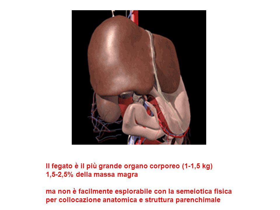 Il fegato è il più grande organo corporeo (1-1,5 kg)