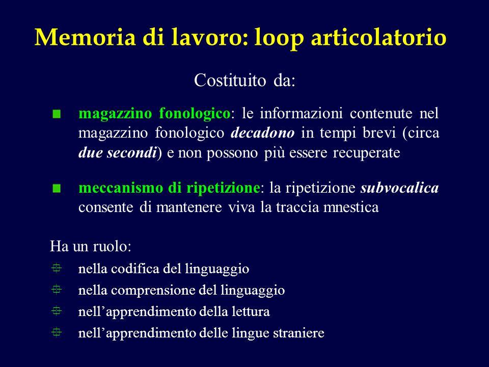 Memoria di lavoro: loop articolatorio