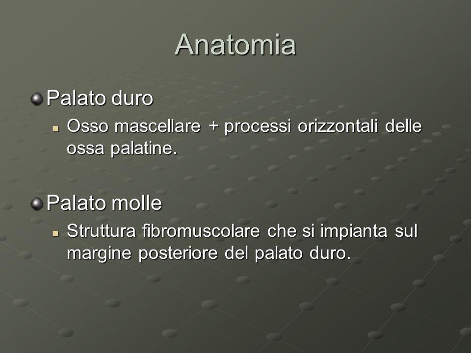 Anatomia Palato duro Palato molle