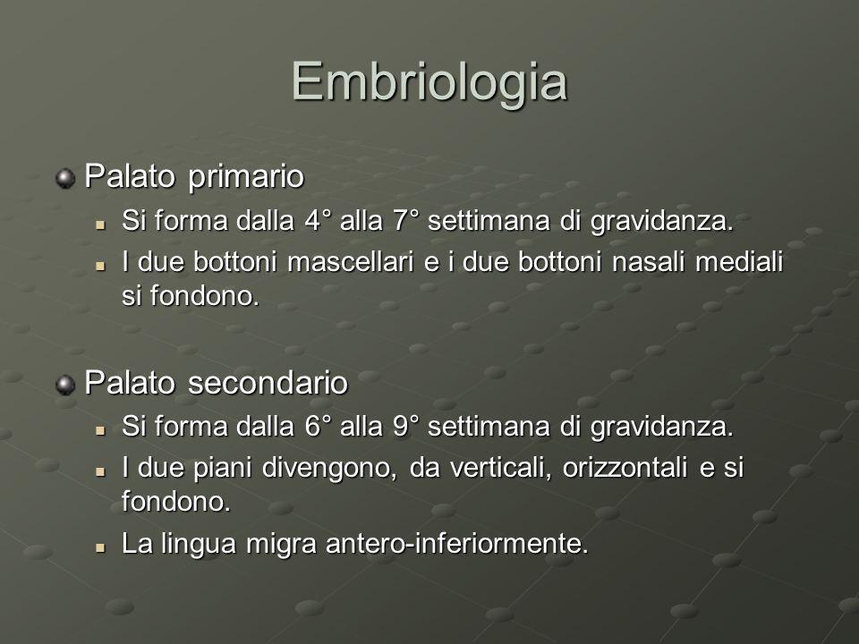 Embriologia Palato primario Palato secondario