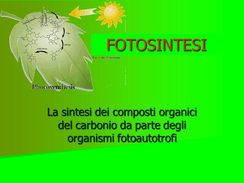 FOTOSINTESI La sintesi dei composti organici del carbonio da parte degli organismi fotoautotrofi